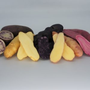 Mixed Exotic Selection Box - La Ratte, Pink Fir Apple, Red Emmalie, Shetland Black, Vitelotte - 2020 The Potato Shop