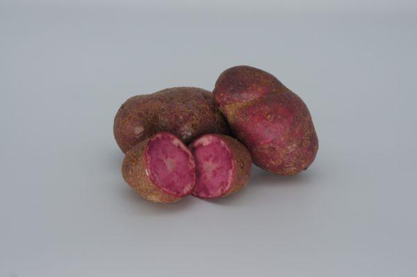 Highland Burgundy Red 2020 The Potato Shop
