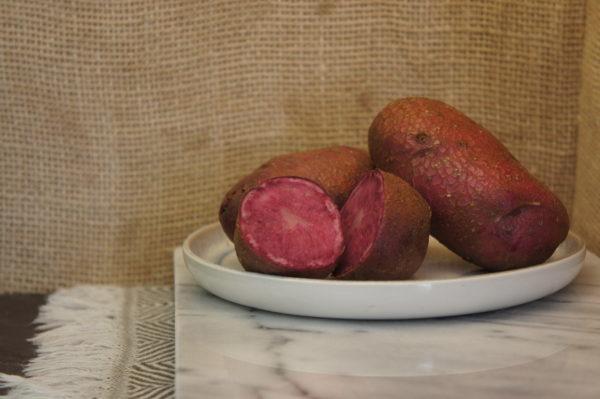 Highland Burgundy Red Potatoes Harvest 2019