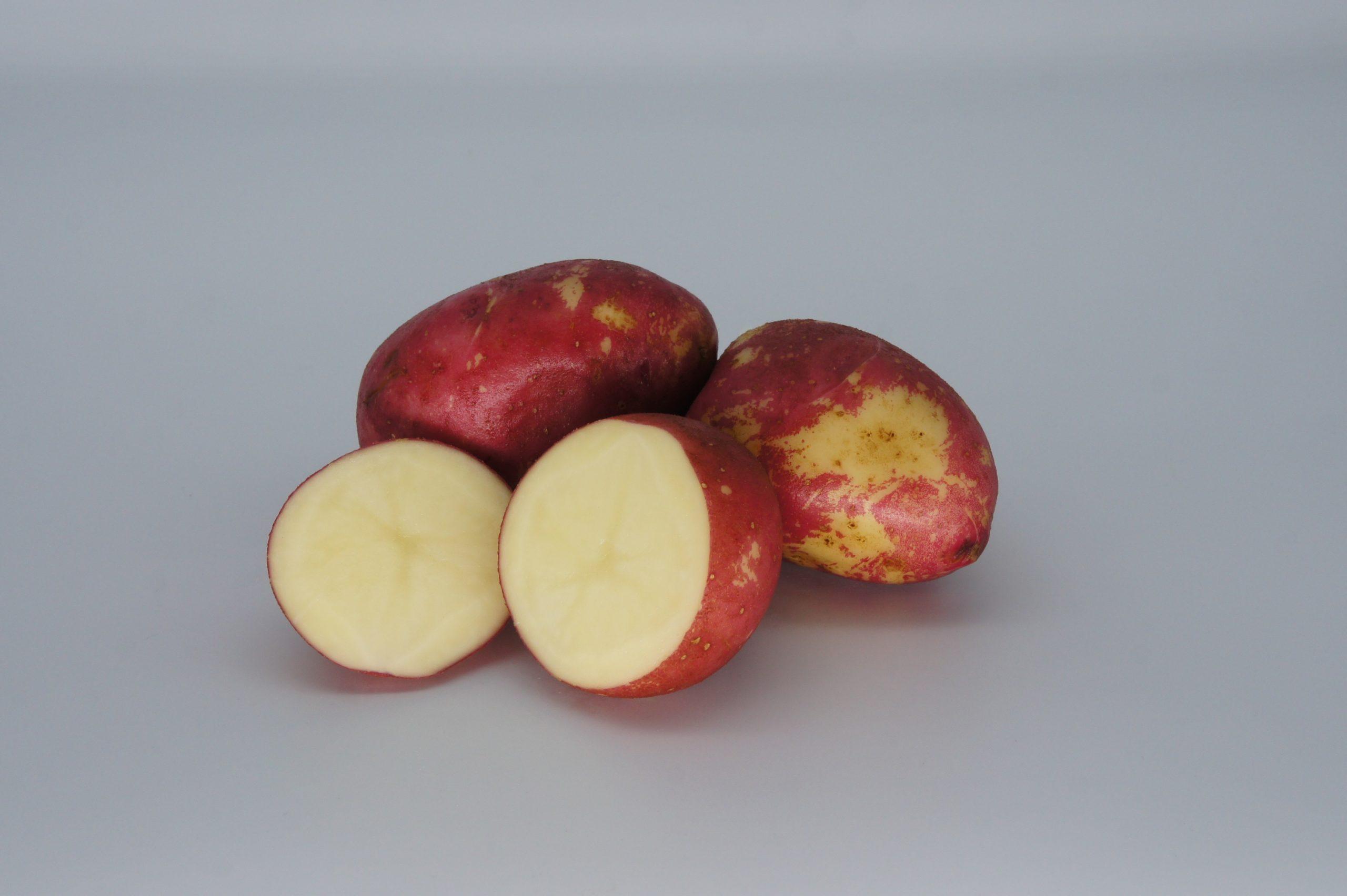 Red King Edward 2020 The Potato Shop