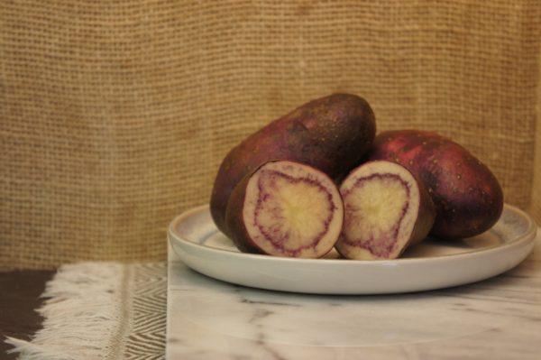 Shetland Black Potatoes Harvest 2019