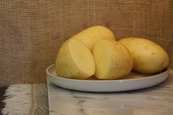 Estima potatoes Harvest 2019