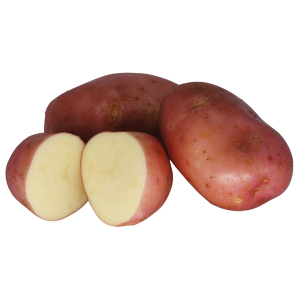 Robinta 2021 The Potato Shop