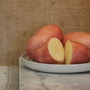 Robinta Potatoes Harvest 2019