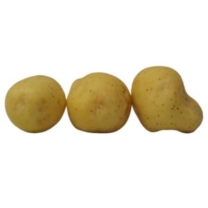 White Duke of York 2021 The Potato Shop