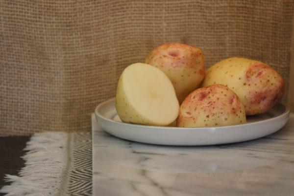 Cara Potatoes Harvest 2019