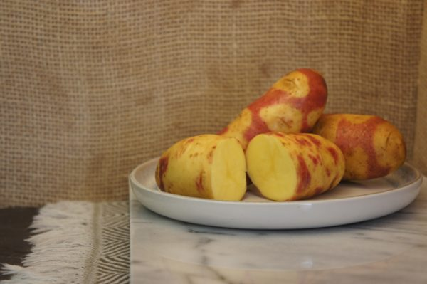 Mayan Twilight Potatoes Harvest 2019