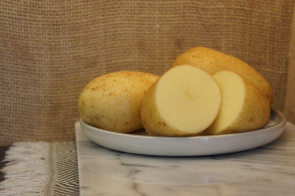 Wilja Potatoes Harvest 2019