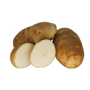 Russet Burbank 2021 The Potato Shop