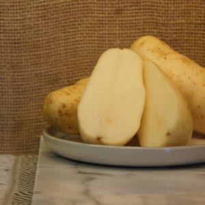 Russet Burbank Potatoes Harvest 2019