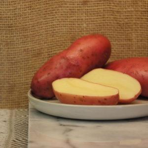 Cherie Red Potatoes Harvest 2019