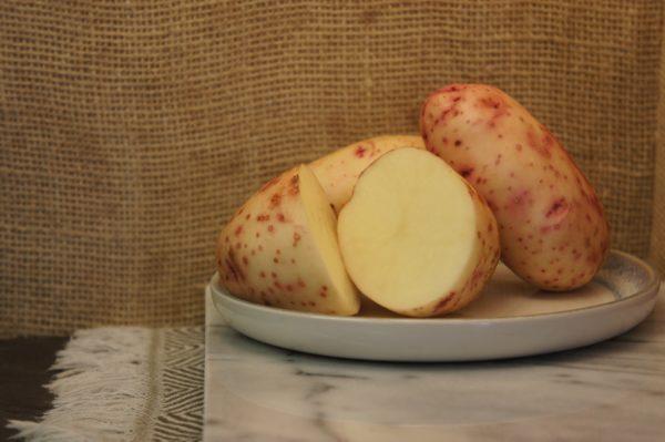 Mary's Rose Potatoes Harvest 2019