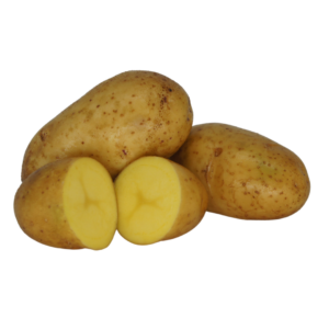 Mayan Scapa 2021 The Potato Shop